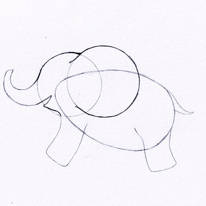 Step 5 - How To Draw An Elephant