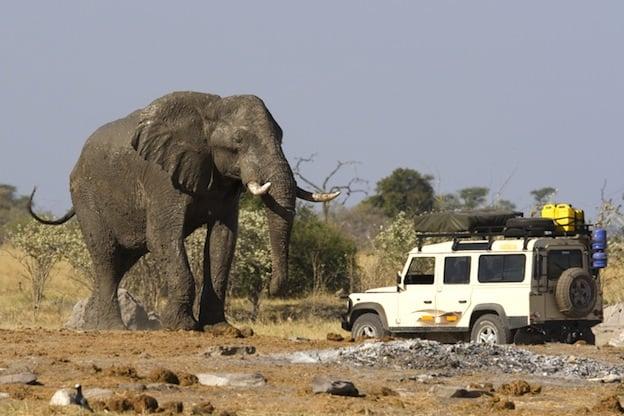 African Elephant Characteristics