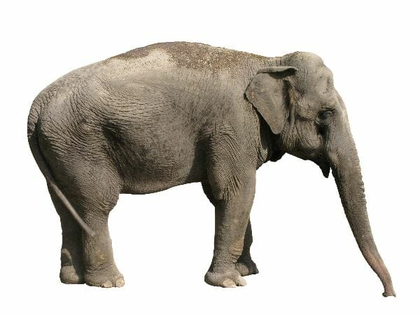 The Elephant Whisperer My Life with the Herd in the