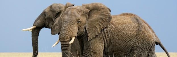 Conservación de los Elefantes