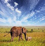 Elefante_Con_Su_Adorable_Cría_150