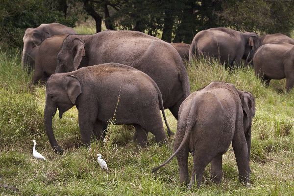 Elephants Looking for Food