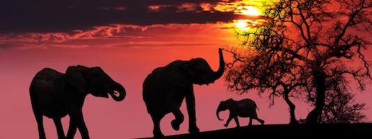 Datos sobre los Elefantes