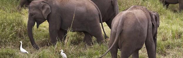 Alimentación de los Elefantes