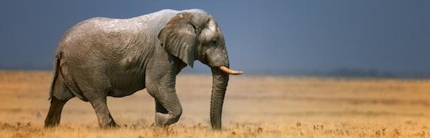 Distribución y Hábitat de los Elefantes
