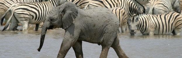 Investigación sobre Elefantes