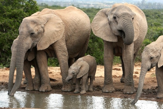 Social Structure of elephants