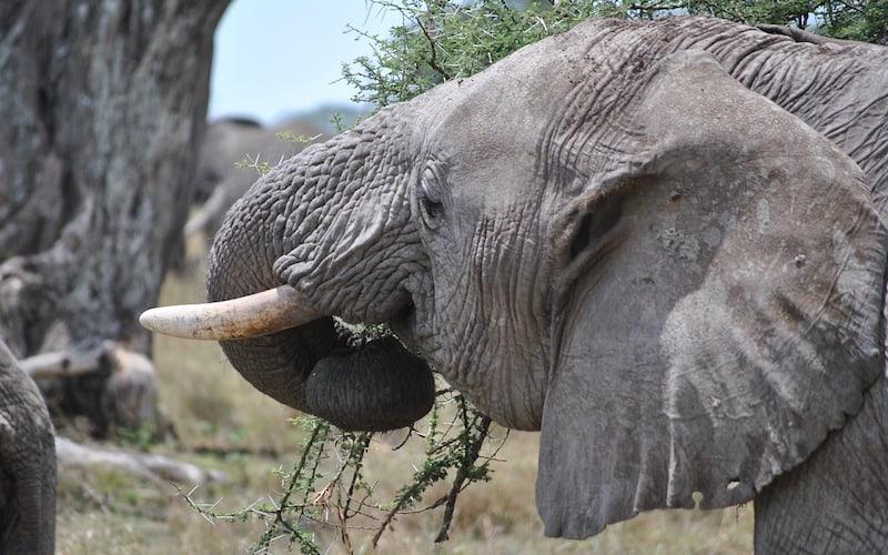 Dieta de los elefantes.