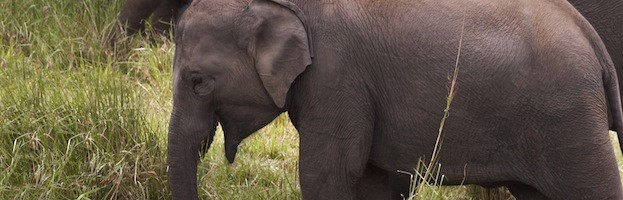 Elephant Conservation Efforts