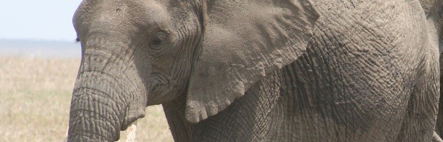 Elephants in Culture