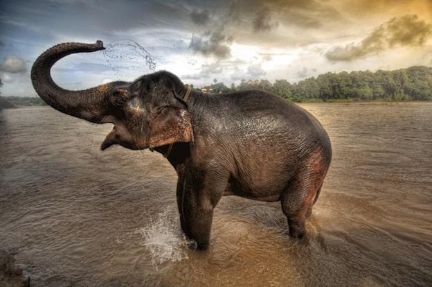 comportamiento individual de los elefantes