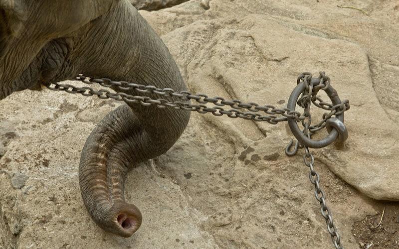 Elefantes y abuso animal.