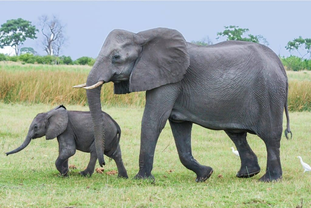 The Cutest Baby Elephant Pictures Ever - Elephant World