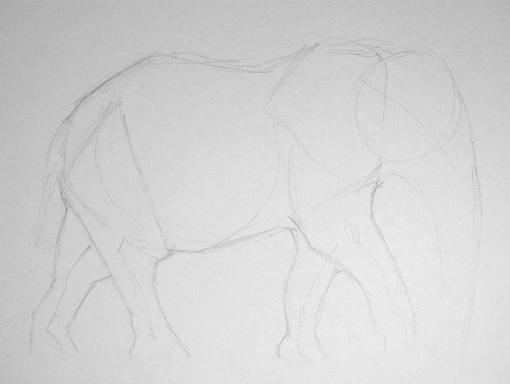 Elephant Drawing Step 1