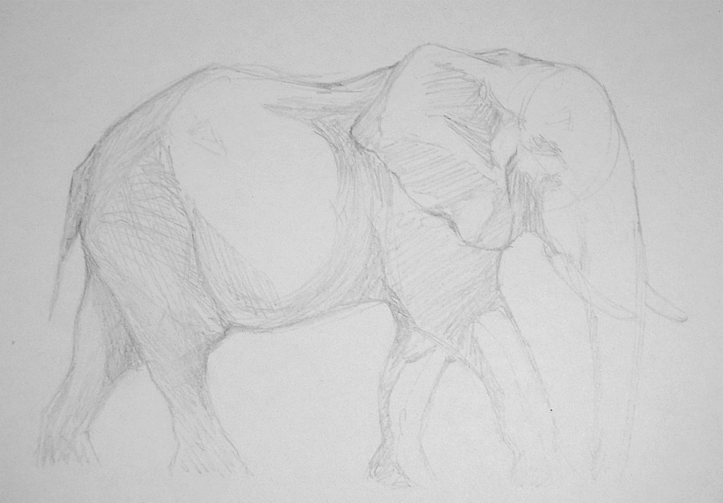Elephant Drawing Step 3