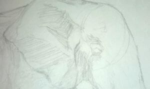 Elephant Drawing Step 5