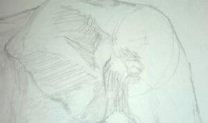 Elephant Drawing Step 5