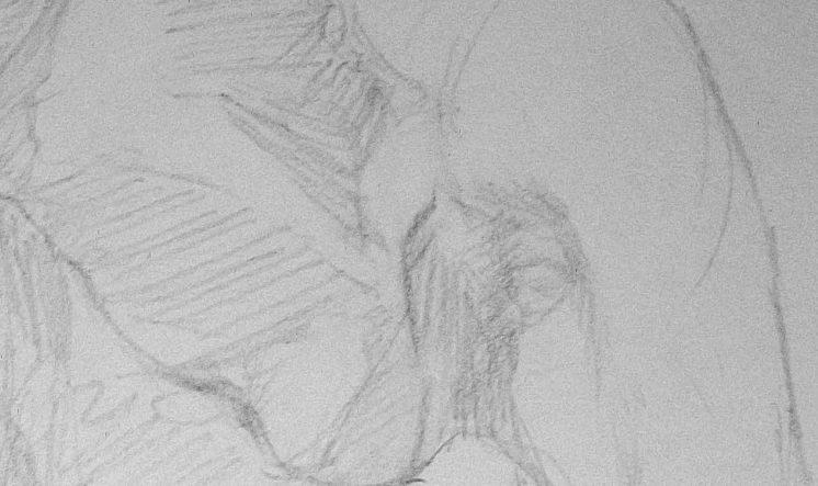 Elephant Drawing Step 6