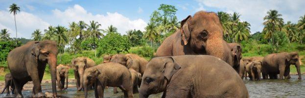 Estructura Social de los Elefantes