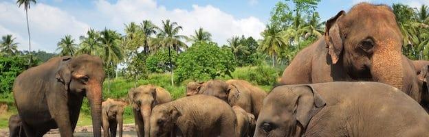 Estructura social de los elefantes.