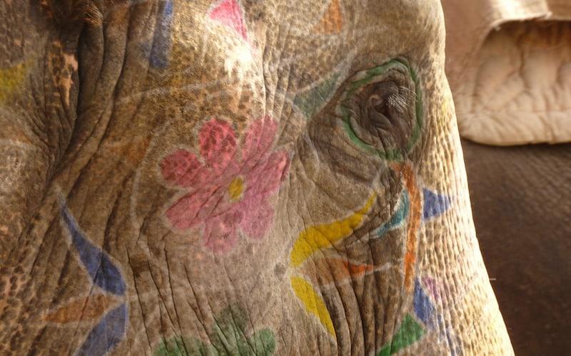 Elefantes asiáticos en festividades.