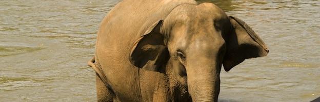 Elephants and Global Warming