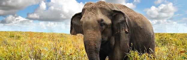Información de los Elefantes
