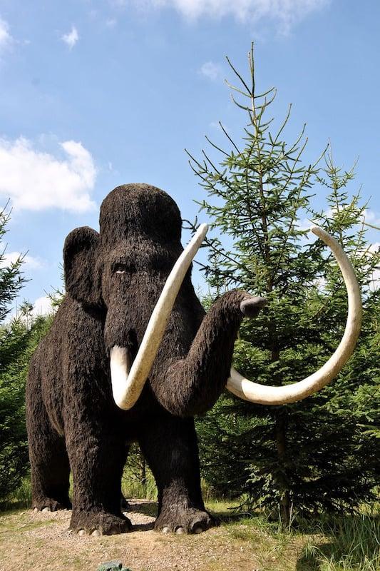 Orígenes de los elefantes.