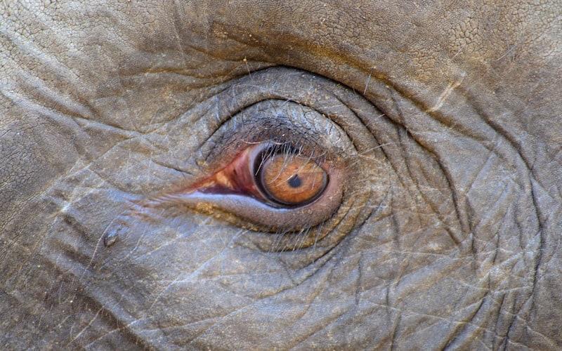 Descripción del elefante.