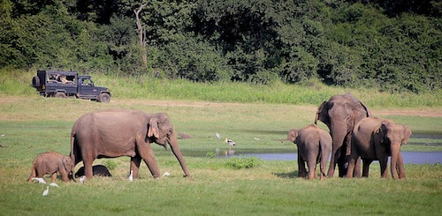 En defensa de los elefantes.