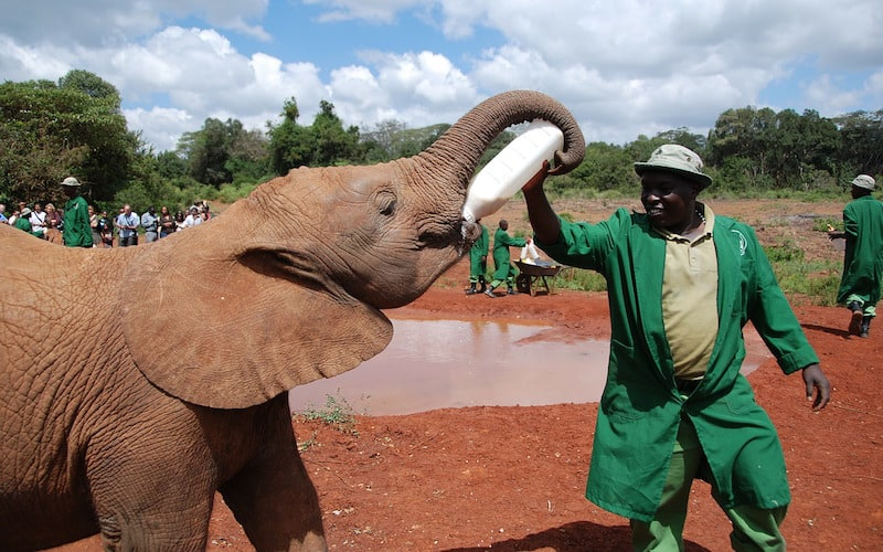 Salvemos a los elefantes.