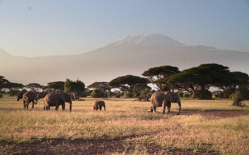 Distribución de los elefantes.