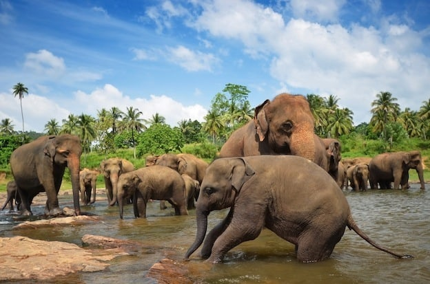 Elephant social behavior