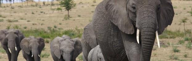 Elephant Videos